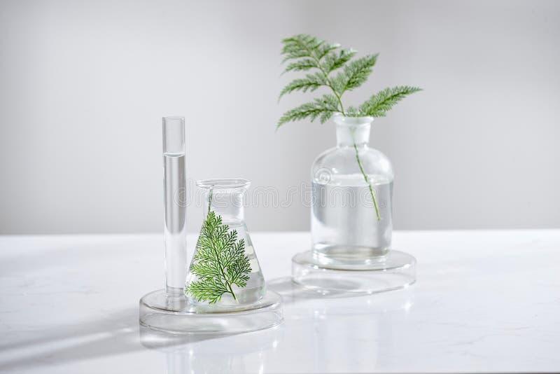 Skincare cosmetico della natura e aromaterapia dell'olio essenziale prodotto di bellezza organico di scienza naturale Medicina al immagine stock