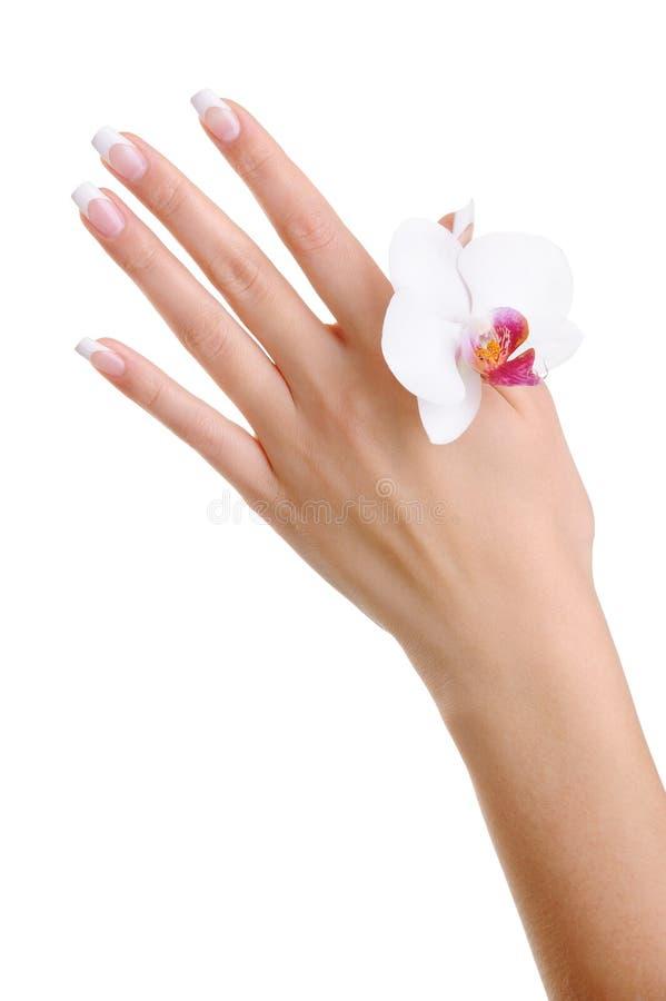 Skincare e pureza de uma mão fêmea foto de stock