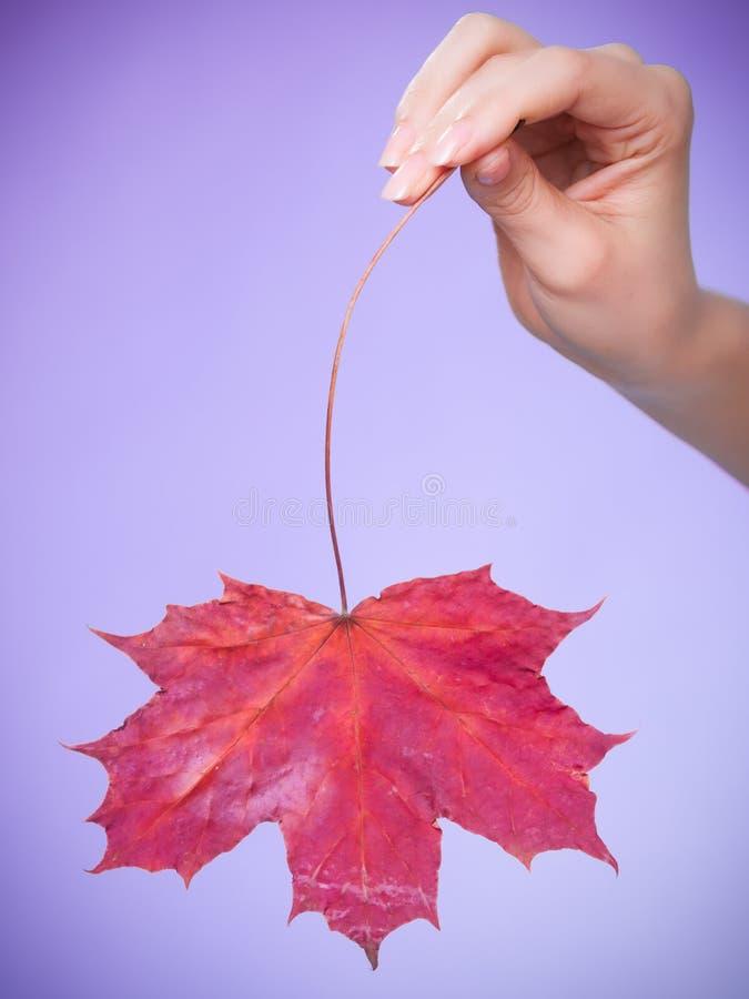 Skincare Mão com a folha de bordo como a pele capilar seca vermelha do símbolo foto de stock royalty free