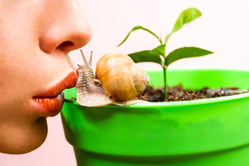 Skincare repairing. Healing mucus. Having fun with adorable snail. Spa and wellness. Cosmetics and snail mucus. Cosmetology beauty procedure. Girl and cute royalty free stock image