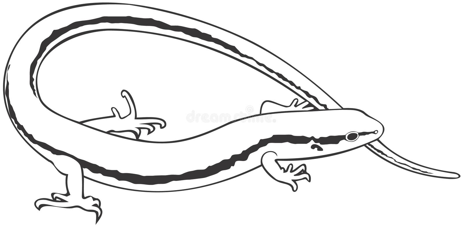 skink stock illustrationer