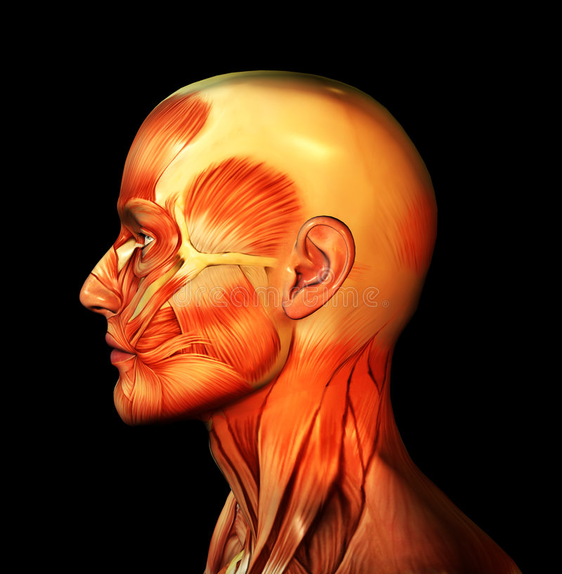 Skinless Face Royalty Free Stock Photography