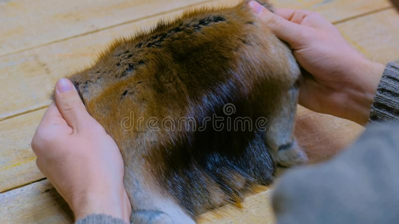 Skinner working with mink fur skin. Professional male skinner, furrier working with mink fur skin at atelier, workshop. Fashion and leatherwork concept stock images