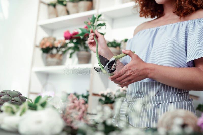 Skinny good-looking woman in stylish blouse carrying pruner. Processing flowers. Skinny good-looking woman in stylish blouse carrying pruner and cutting sluggish stock image