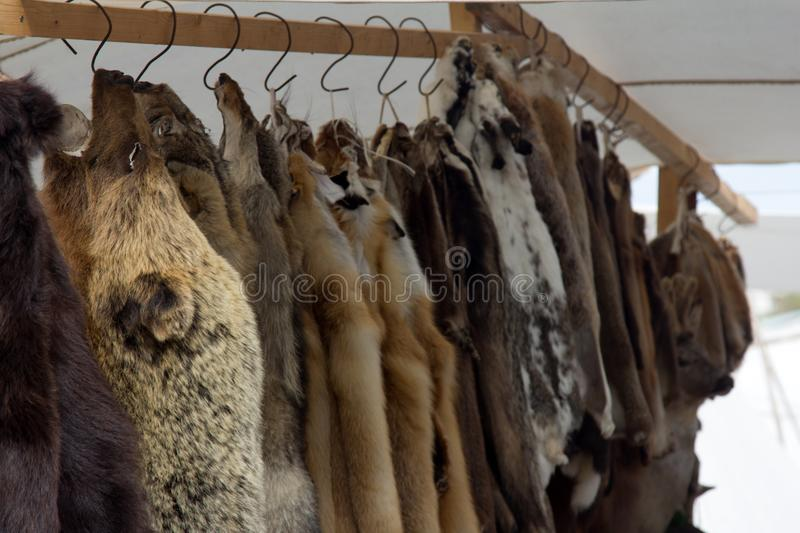 Skins of bears, wild boars, foxes, wolves at Russian fair stock photo