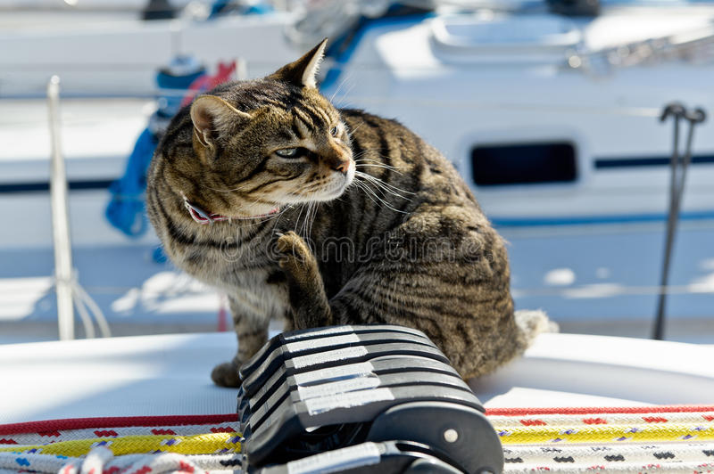 Download Skipper cat stock photo. Image of pier, maritime, nature - 43077366