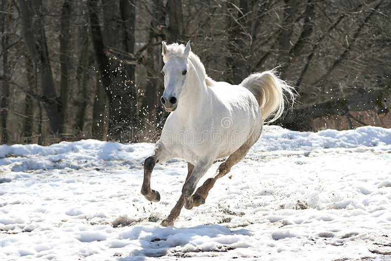 Skipping white horse. On a background of a wood