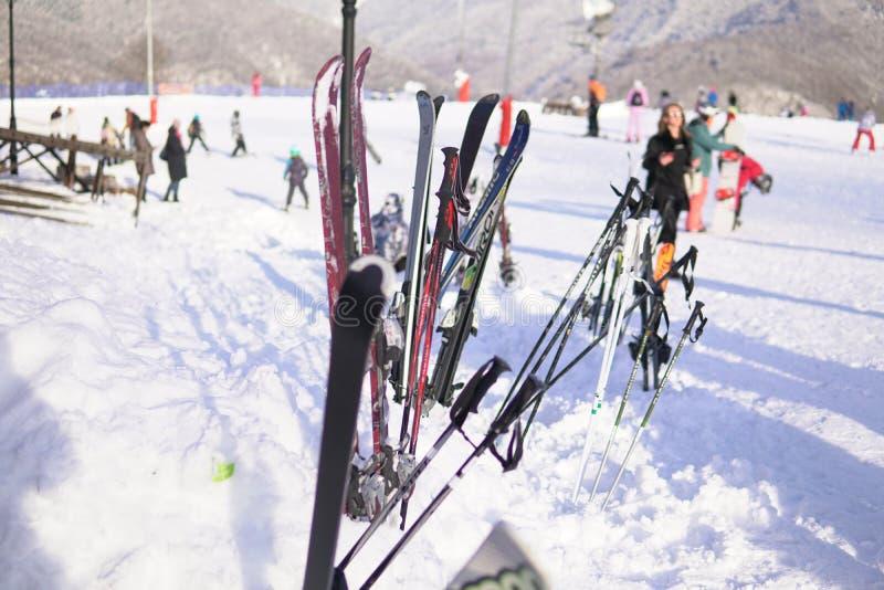 Skis et surfs des neiges alpins au voyage de vacances de station de sports d'hiver de neige image libre de droits