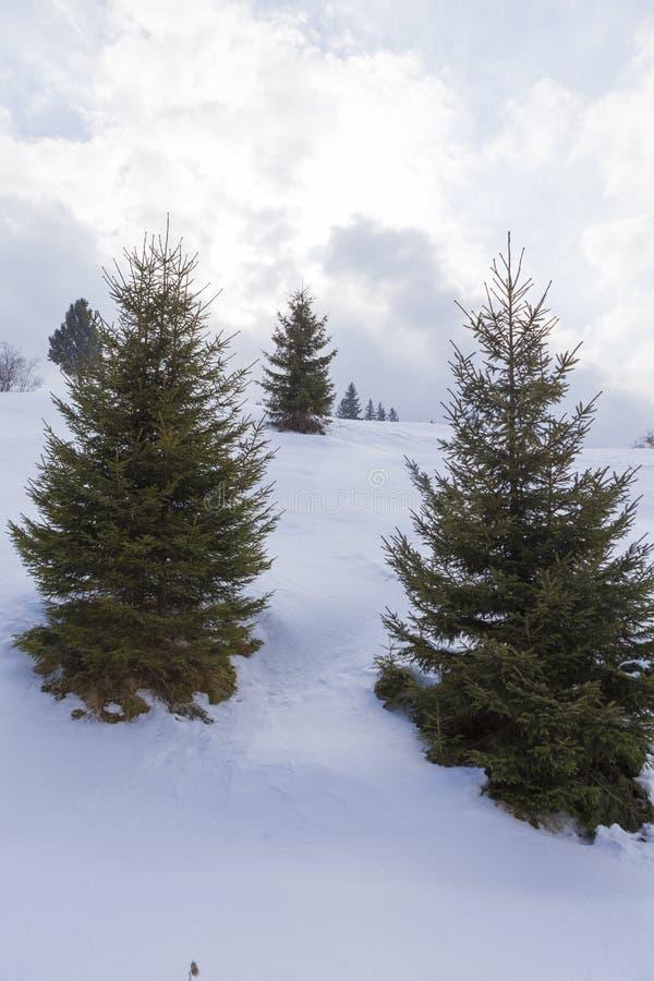 Skispoor en Bucsoiu-berg royalty-vrije stock afbeelding