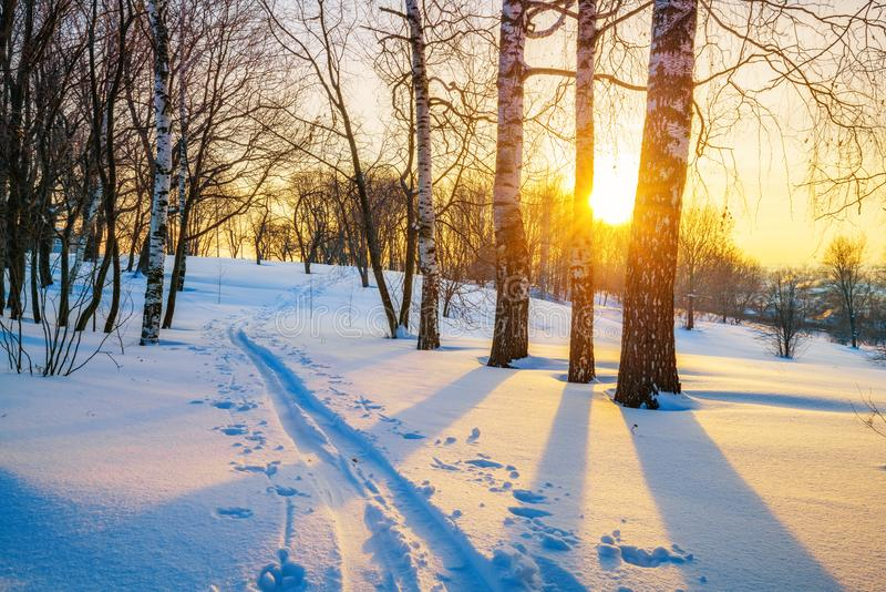 Skispur im Winterwald stockbild