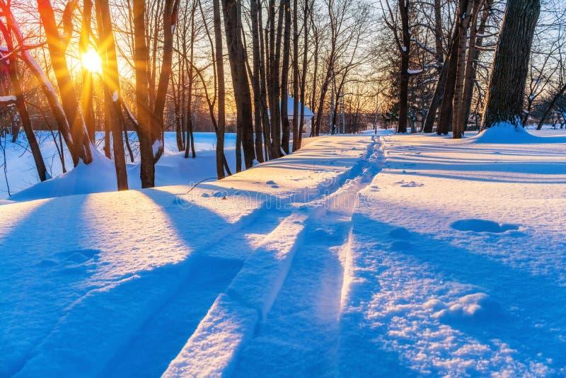 Skispur im Winterwald lizenzfreie stockfotografie