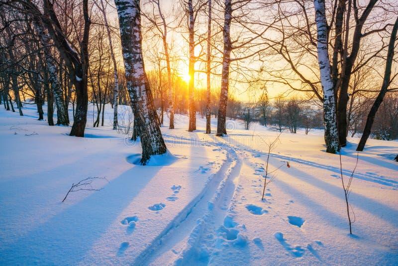 Skispur im Winterwald stockfoto