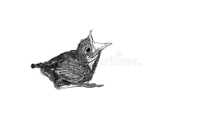 Skissa av behandla som ett barn gnola fågeln som sitter på det vita arket arkivbilder