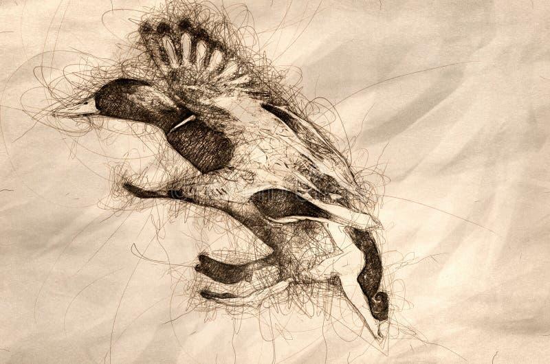 Skissa av en gräsand Duck Landing på det kalla vattnet vektor illustrationer