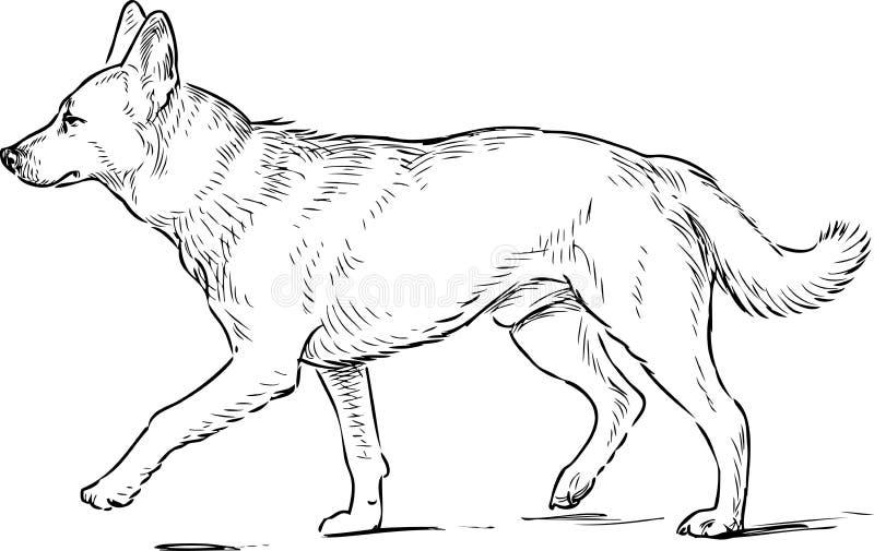 Skissa av en stega herdehund royaltyfri illustrationer