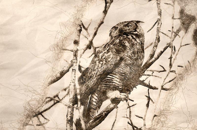 Skissa av en stora Horned Owl Scanning Across trädblasten arkivfoton