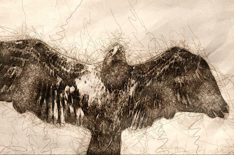 Skissa av en unga skalliga Eagle Flying i den blåa himlen arkivbild