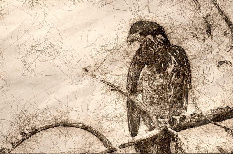 Skissa av en unga skalliga Eagle Surveying området, medan sätta sig i ett kargt träd royaltyfri fotografi