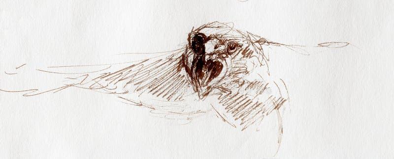 Skissa av ett örnhuvud på ett papper vektor illustrationer
