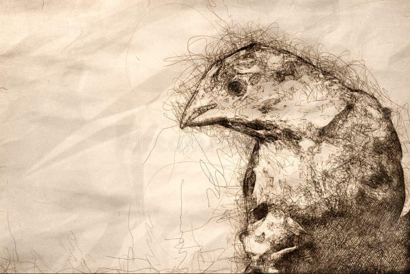 Skissa av ett manligt hus Finch Profile royaltyfri illustrationer