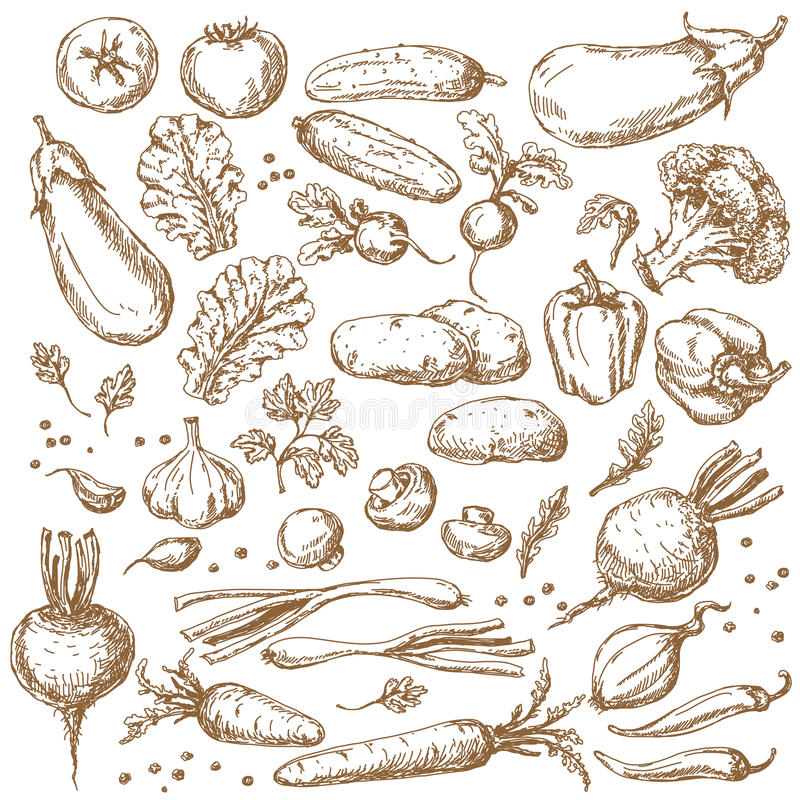 Skissa av grönsakuppsättning stock illustrationer