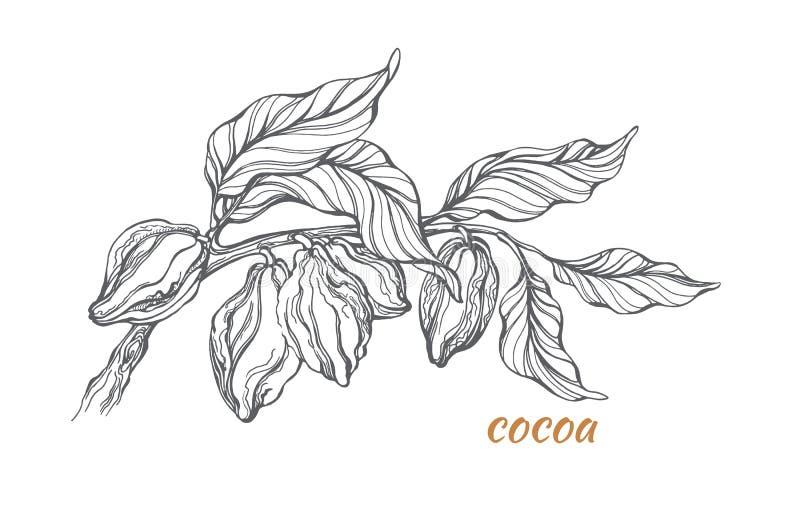 Skissa av kakaoträdfilial vektor stock illustrationer