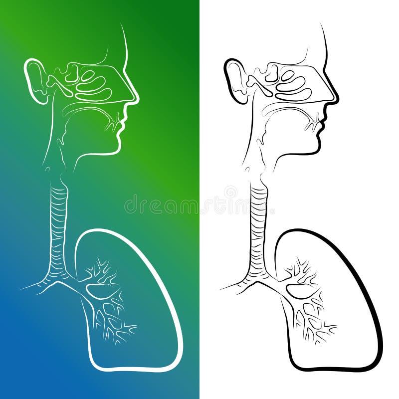 Skissa av organ för respiratoriskt system royaltyfri illustrationer