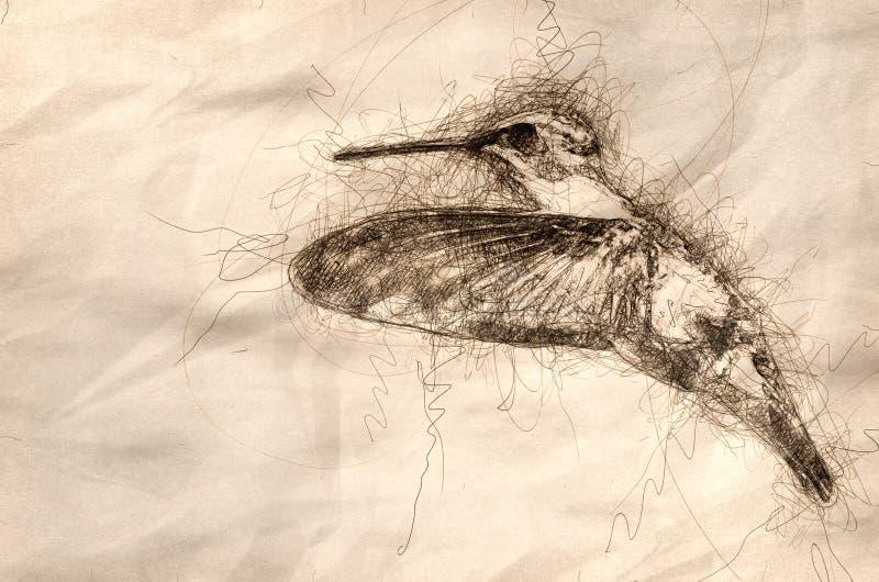 Skissa av svart-Chinnedkolibrin som i flykten svävar stock illustrationer