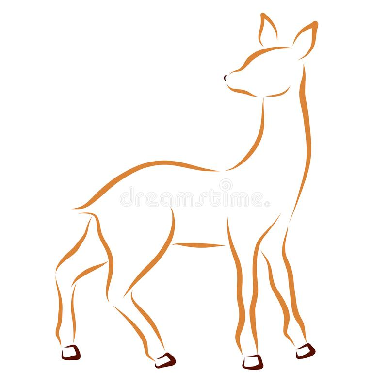 Skissa av ung hjortar eller doe vektor illustrationer