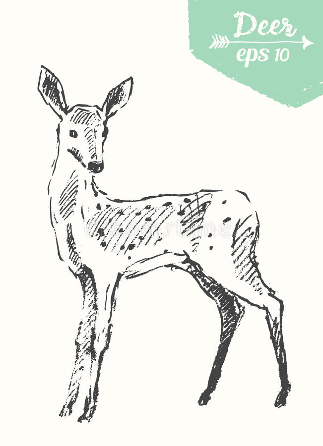 Skissa drog vektorn för hjorttappningillustrationen handen vektor illustrationer