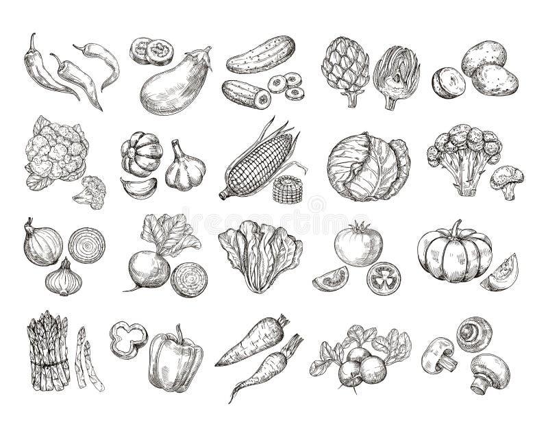 Skissa grönsaker Dragen trädgårds- grönsaksamling för tappning hand Vektor för lantbruk för champinjon för sallad för morotbrocco royaltyfri illustrationer