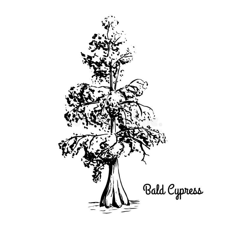 Skissa trädillustrationen royaltyfri foto