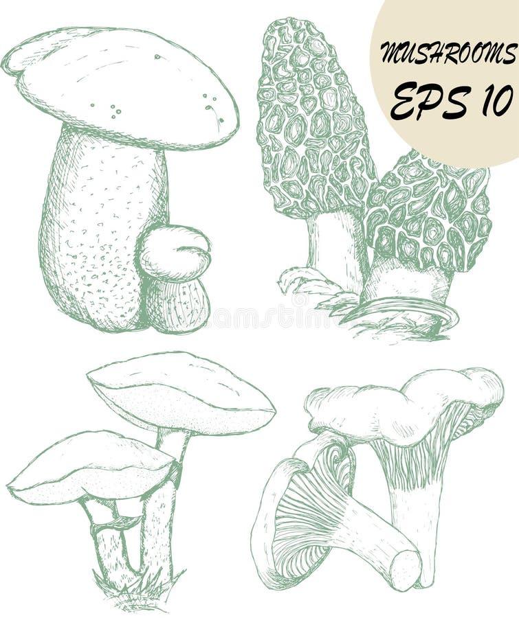 Skissar av champinjoner stock illustrationer