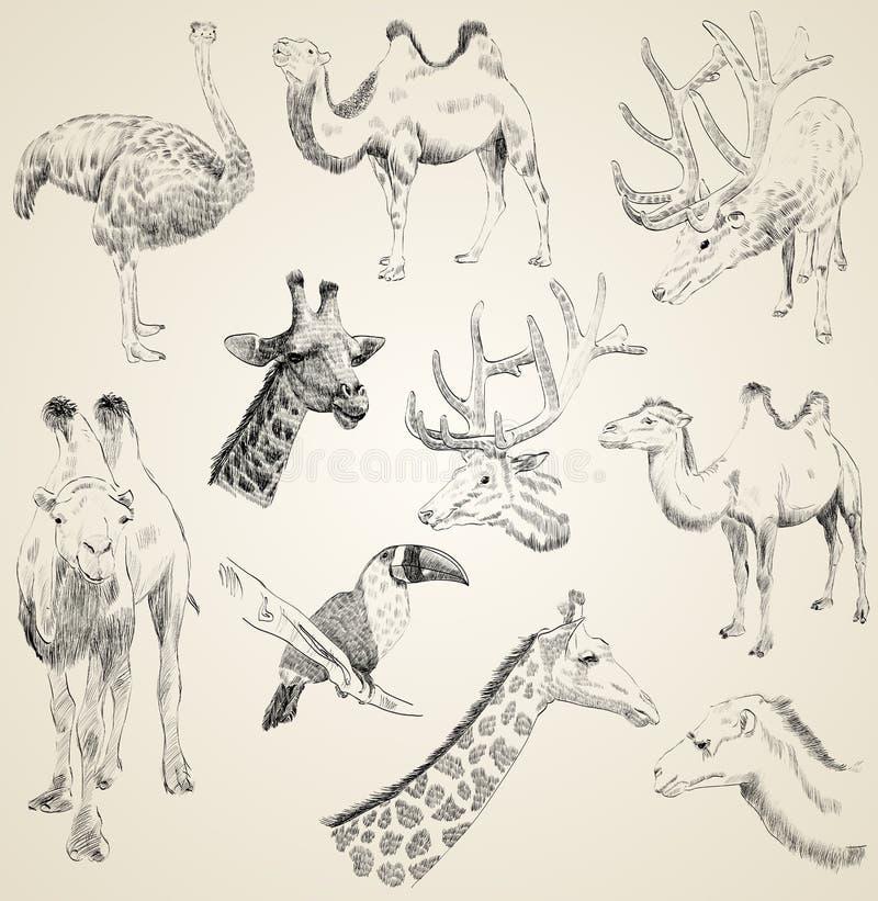 Skissar av djur vektor illustrationer