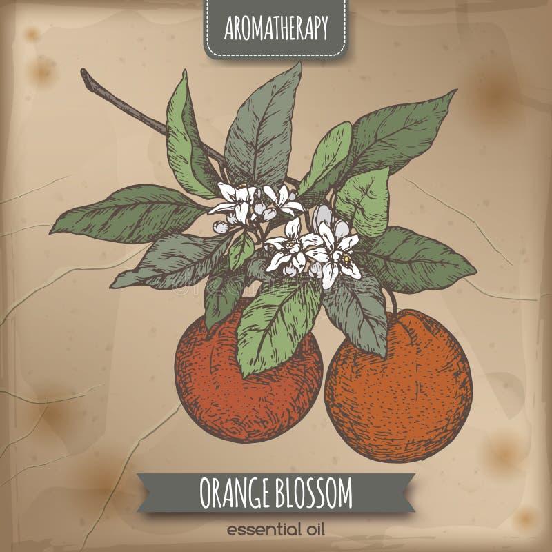 Skissar den orange blomningen för färg på tappningbakgrund royaltyfri illustrationer