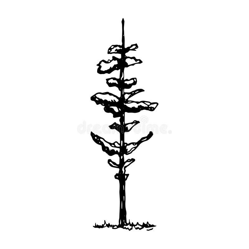 Skissar den prydliga vektorn för trädet isolerat På en vit bakgrund stock illustrationer