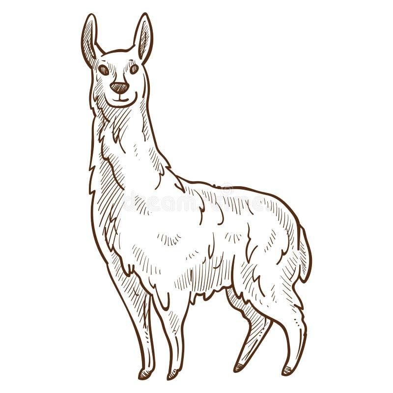 Skissar djur seende rak monokrom för lama vektorillustrationen vektor illustrationer