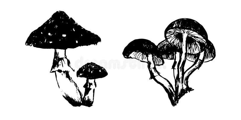 Skissar utdragna giftiga champinjoner för hand illustrationen Teckning för vektorsvartfärgpulver som isoleras på vit bakgrund Gru vektor illustrationer