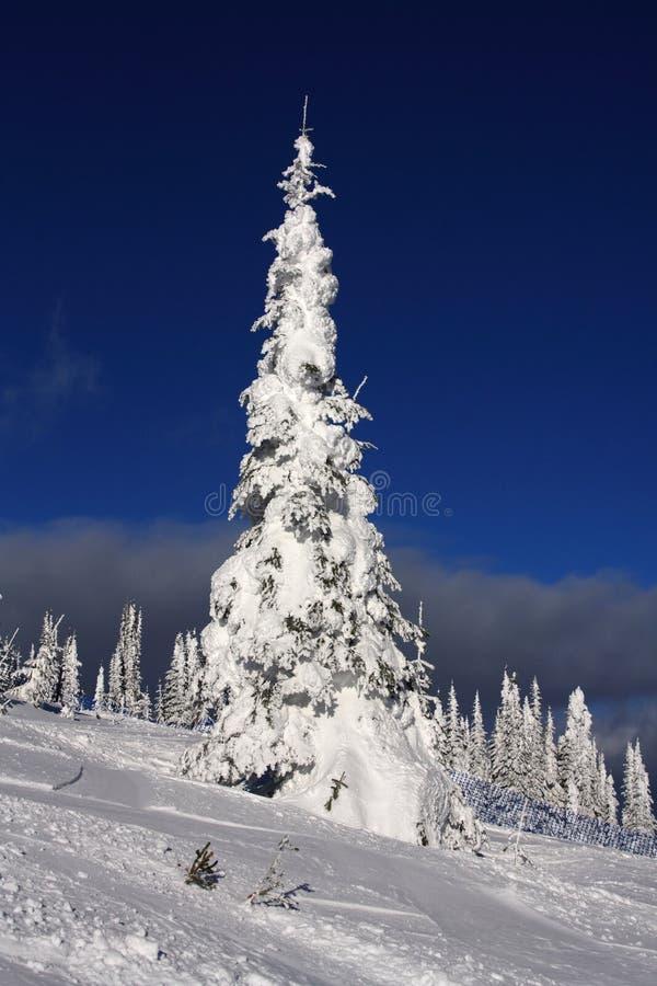 Skisteigungen des silbernen Sternes lizenzfreie stockfotografie