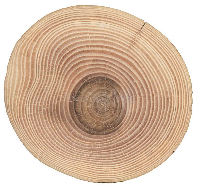 Skiva av den wood askaen royaltyfri foto