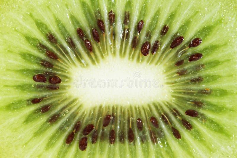 Skiva av ny kiwi royaltyfri bild