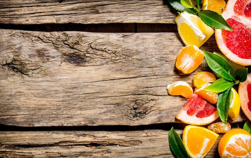 Skivad citrus - grapefrukt, apelsin, tangerin, citron, limefrukt med sidor royaltyfri fotografi