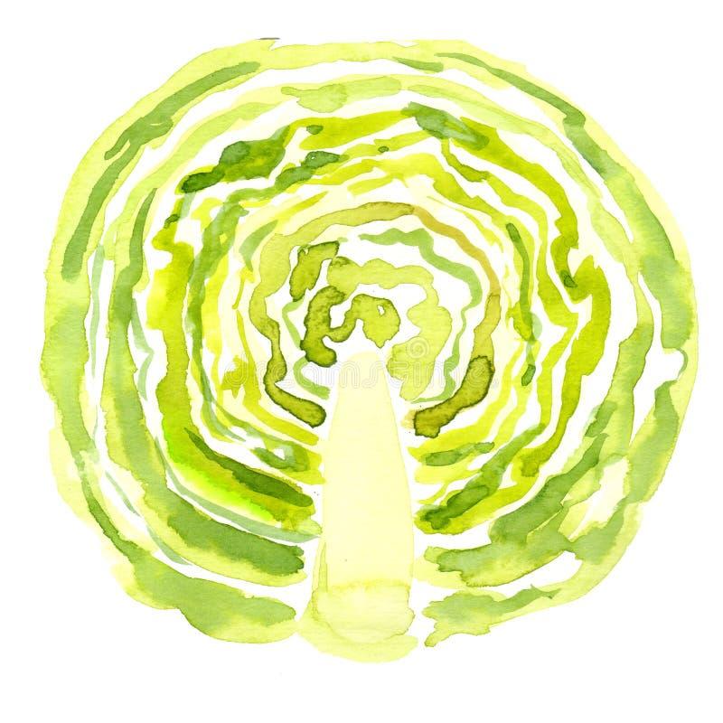 Skivad grön kål stock illustrationer