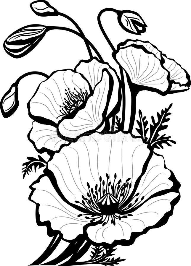 Skizze der Mohnblumeblumen stock abbildung