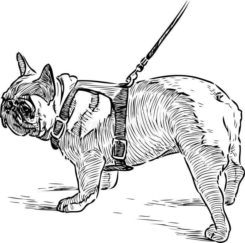 bulldogge zeichnung stock illustrationen vektors