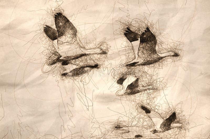 Skizze einer Menge der Schnee-Gänse im Flug lizenzfreie abbildung