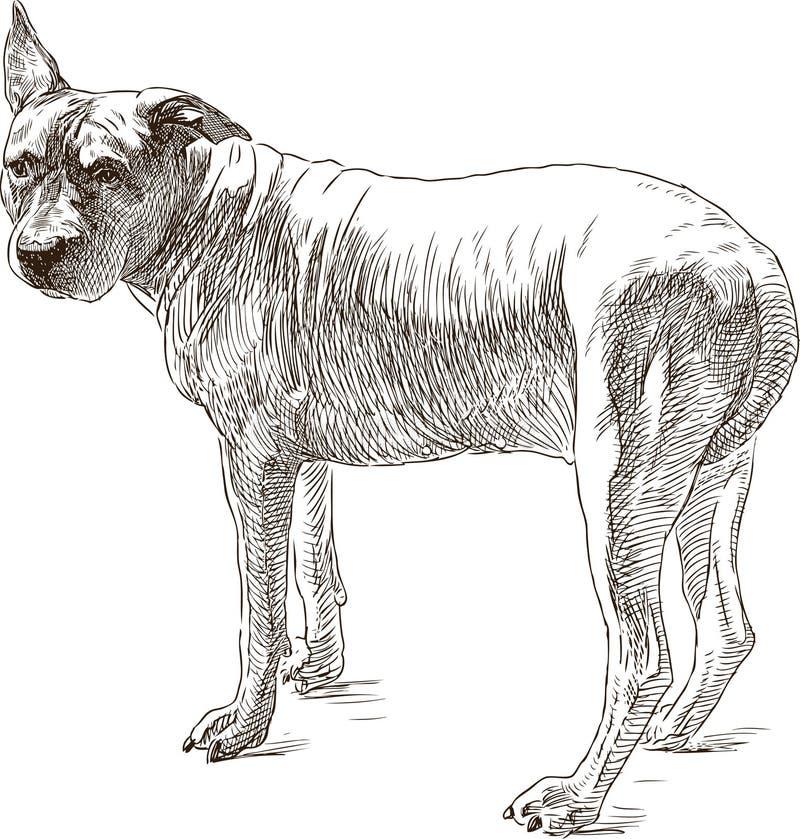 Skizze eines alten Pitbullterriers vektor abbildung