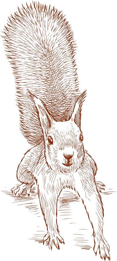 Skizze eines lustigen Eichhörnchens lizenzfreie abbildung