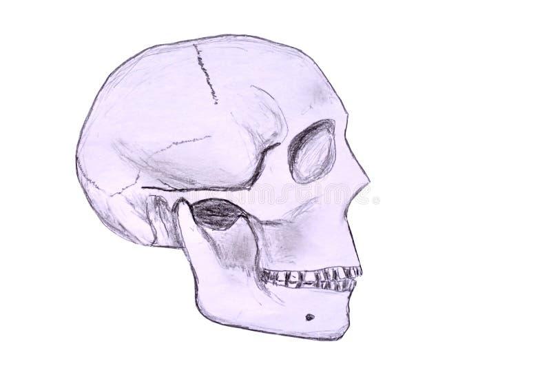 Skizze eines menschlichen Schädels stock abbildung