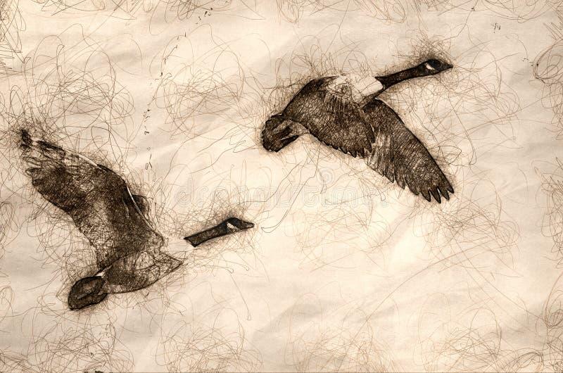 Skizze eines Paares Kanada-G?nse, die in einen blauen Himmel fliegen stock abbildung